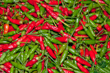 The Red and green chili background texture