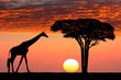 canvas print picture - African sunset