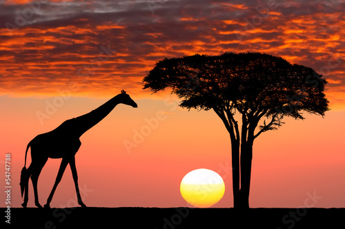 canvas print picture African sunset