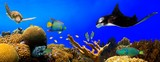 Underwater tropical reef panorama