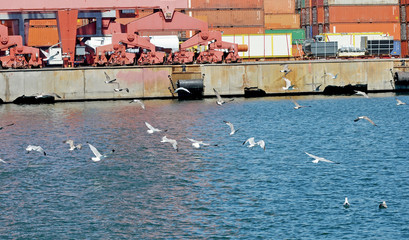 seagulls in the port