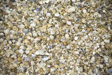 Conchas en playa