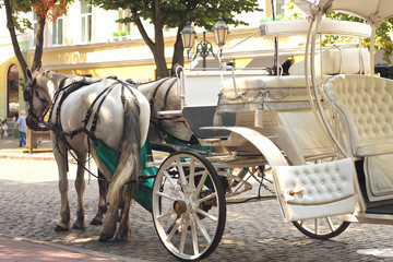 Horses drawn carriage on summer city street