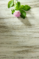 Clover flower with leaves on wooden table