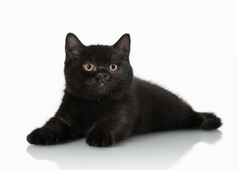 small black british kitten on white background