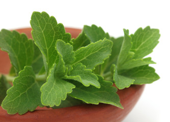 Stevia – A substitute of sugar on a brown pot