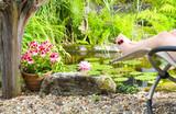 Fototapety Auszeit, Relaxen am Gartenteich