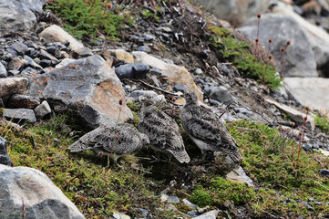 Birds. National Park Torres del Paine. Chile.