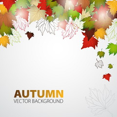 Autumn with leaves background