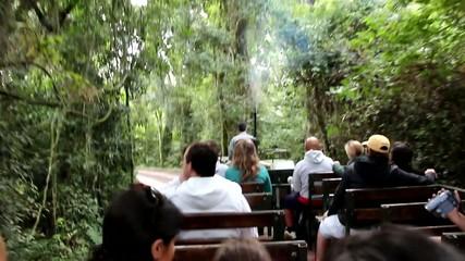 Tour en la selva_9928