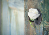 Green old wooden door with a white rose