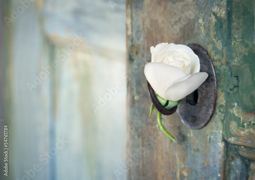 Green old wooden door with a white rose - 54761784