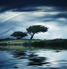 Windblown tree over water at twilight