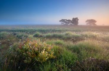 warm summer sunrise over swamps