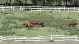 horses in corral on farm