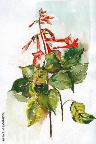Fuchsia © Heidrun Gellrich