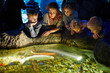 Young woman and children look at fishes in enlighted pool