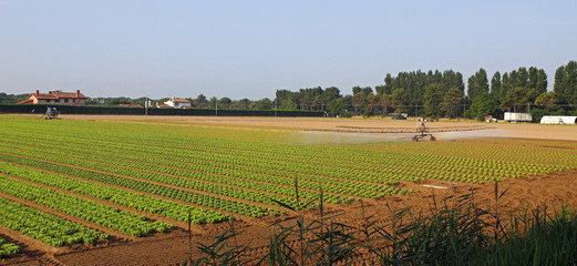 automatic irrigation system for a field of green and fresh salad