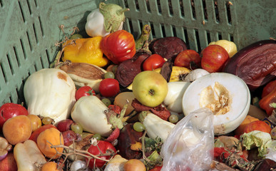 scraps of rotten fruit and vegetables used as manure in a farm