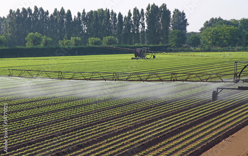 automatic irrigation system for a field of green salad