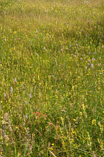 faded wild-flower meadow