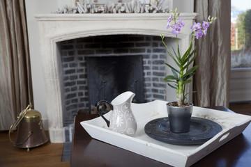 Dendrobium orchid in interior