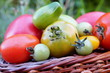 colored tomatoes and  wicker basket