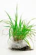 Pflanze im Plastiksack