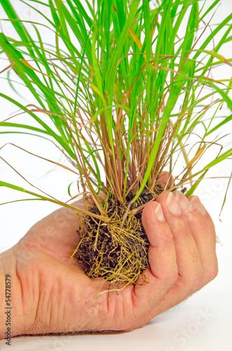 Hand und Pflanze