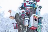 Fototapety decor birdhouse nesting box snow tree trunk winter