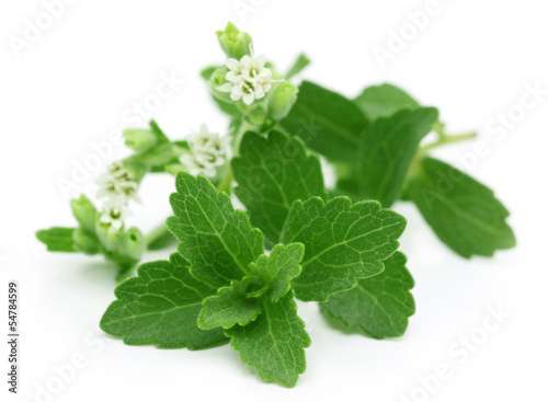 Stevia – A substitute of sugar with flower