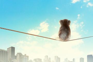 Meerkat walking on rope