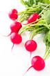 Fresh spring radish