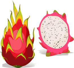 dragon fruit - vector illustration
