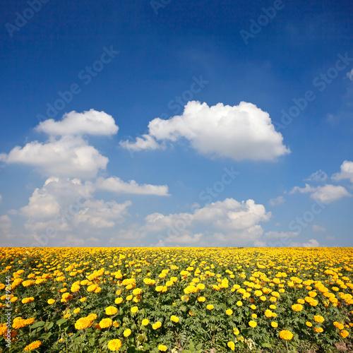 Fototapeten,hintergrund,schön,blühen,blühen