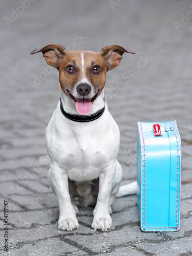 Papiers peints Porter vacation dog