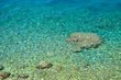 Amazing beach with crystal clear water. Podgora, Croatia