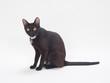 構える黒猫