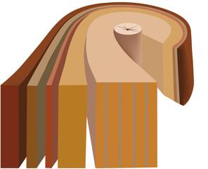 struttura del legno