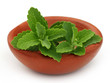 Stevia on a brown bowl over white background