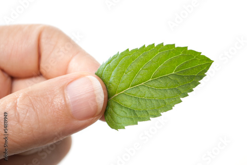 Male hand holding a green mint leaf