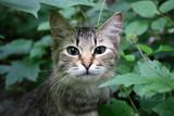 cat in a grass - 54821925