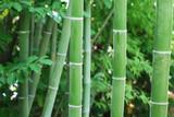 les bambous...