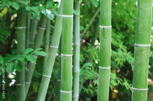 Fotobehang Bamboe les bambous...