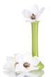 Beautiful magnolia in vase isolated on white