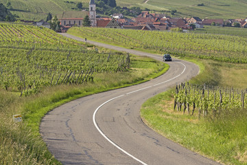 Road in vineyard. Route du vine. Alsace , France.