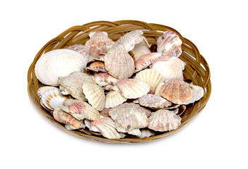 seashells in a basket on a white background