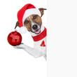 hello goodbye christmas  dog