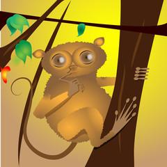 Cute Philippine Tarsier Smallest Monkey Curious