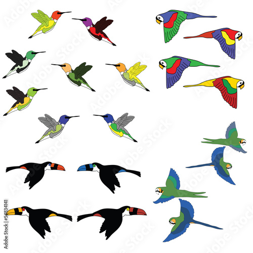 Hand draw Colorful collection of birds. Vector